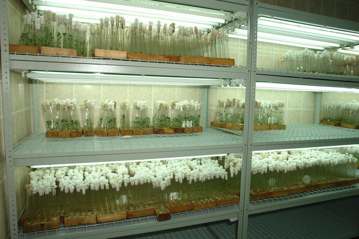 Гродненский зональный институт растениеводства. Конференция Сорта и технологии: инновации в растениеводстве
