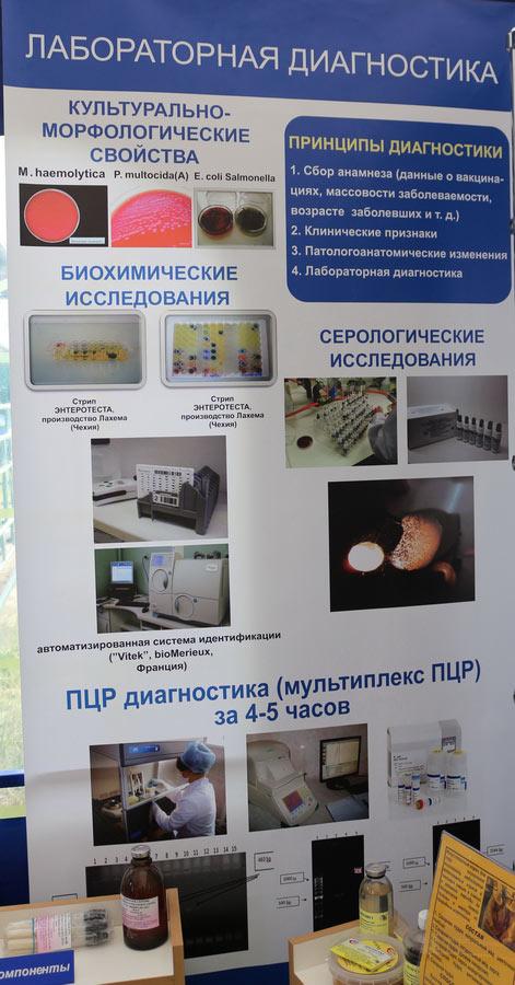Институт экспериментальной ветеринарии им. С. Н. Вышелесского. Лабораторная диагностика