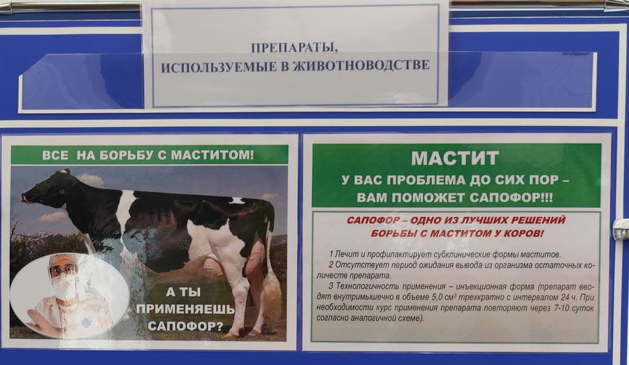 Институт экспериментальной ветеринарии им. С. Н. Вышелесского. Сапофор - средство для борьбы с маститом
