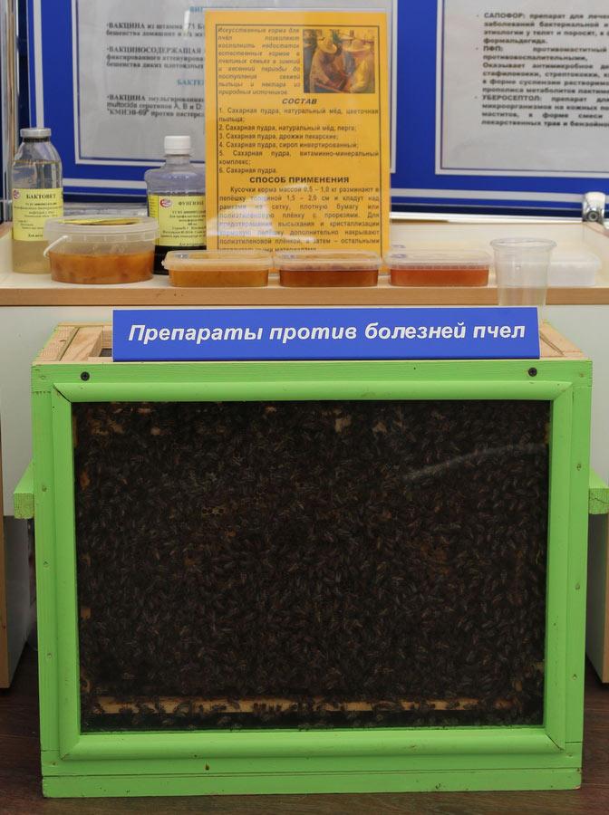 Институт экспериментальной ветеринарии им. С. Н. Вышелесского. Препараты против болезней пчел