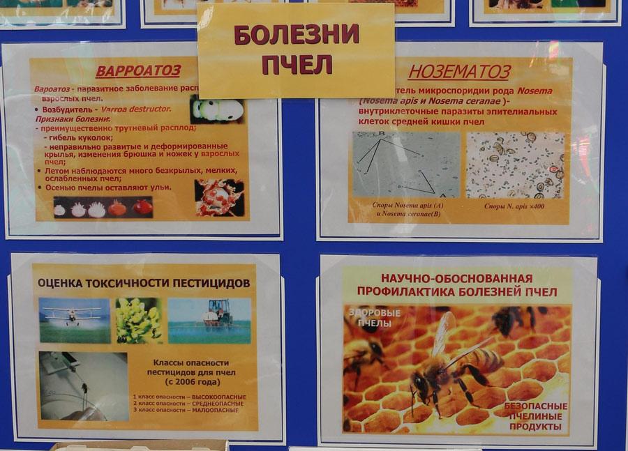 Болезни пчел. Варроато, нозематоз. Исследования Института экспериментальной ветеринарии им. С. Н. Вышелесского