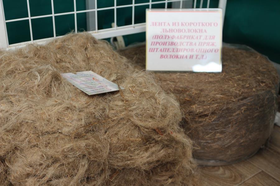 Институт льна. Образцы волокна льняного короткого. Лента из короткого льноволокна (полуфабрикат для производства пряж, штапеллированного волокна и д.т.)