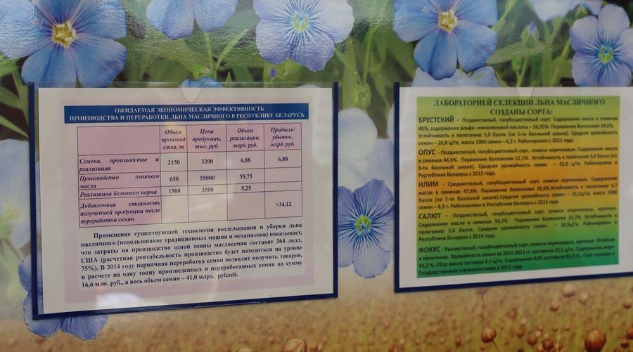 Институт льна. Экономическая эффективность производства и переработки льна масличного. Сорта льна масличного