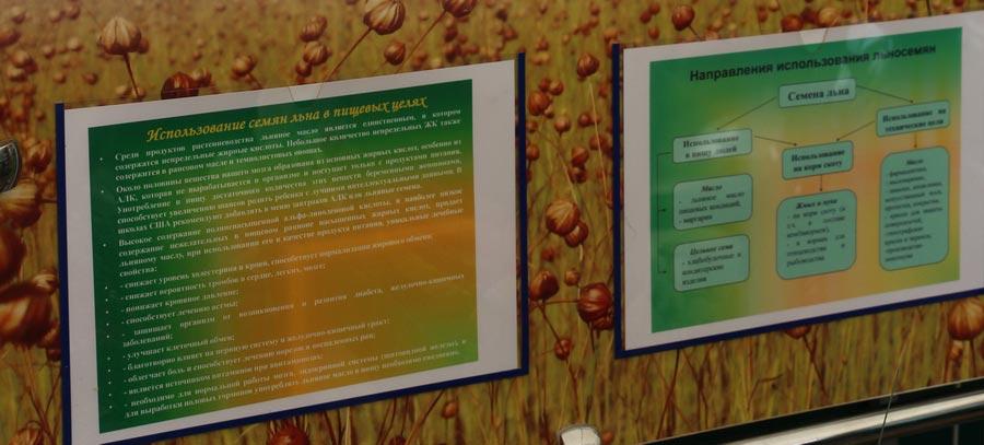 Институт льна. Использование семян льна в пищевых целях. Направления использования льносемян