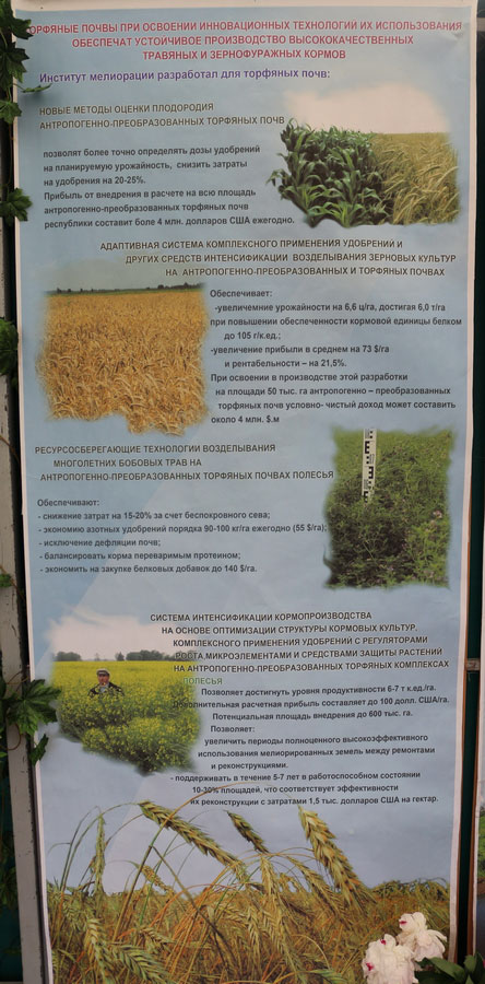 Торфяные почвы при освоении инновационных технологий их использования обеспечат устойчивое производство высококачественных травяных и зернофуражных кормов