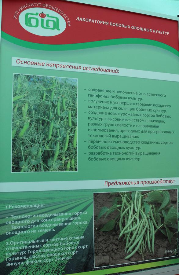 Институт овощеводства на БЕЛАГРО-2016. Лаборатория бобовых овощных культур