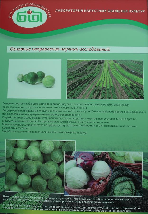 Институт овощеводства на БЕЛАГРО-2016. Лаборатория капустных овощных культур