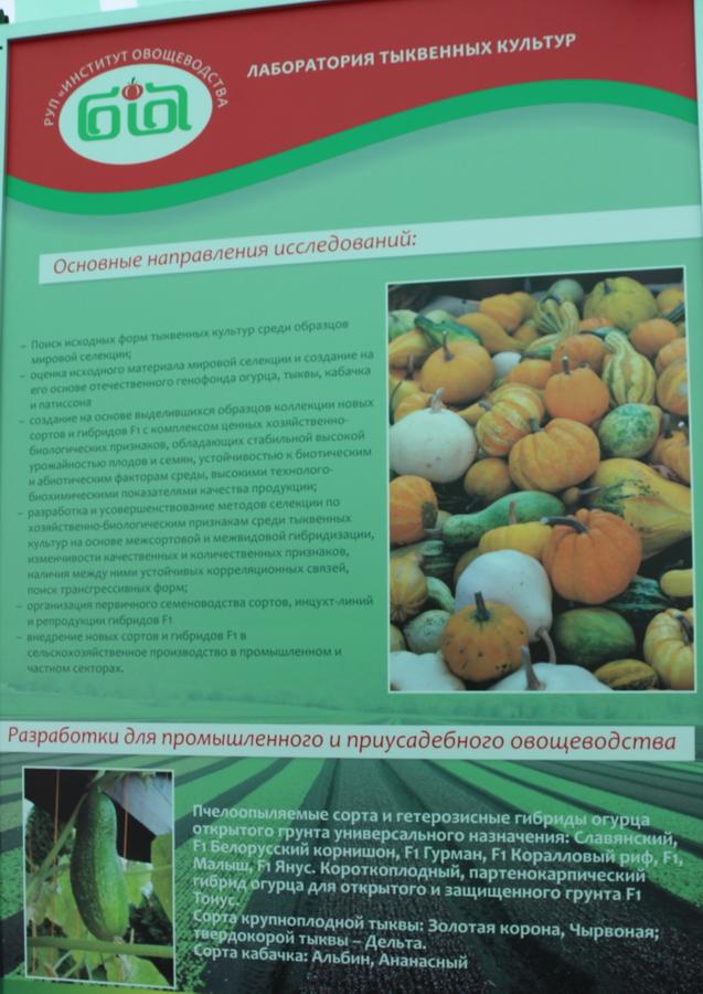 Институт овощеводства на БЕЛАГРО-2016. Лаборатория тыквенных культур