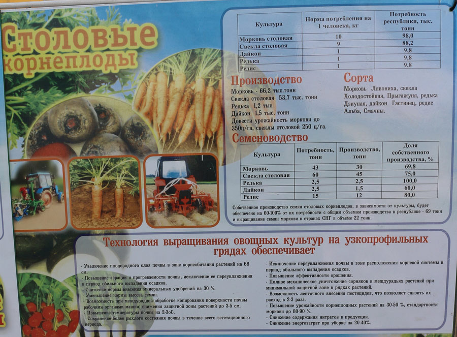 Институт овощеводства на БЕЛАГРО-2016. Столовые корнеплоды. Технология выращивания овощных культур на узкопрорфильных грядах