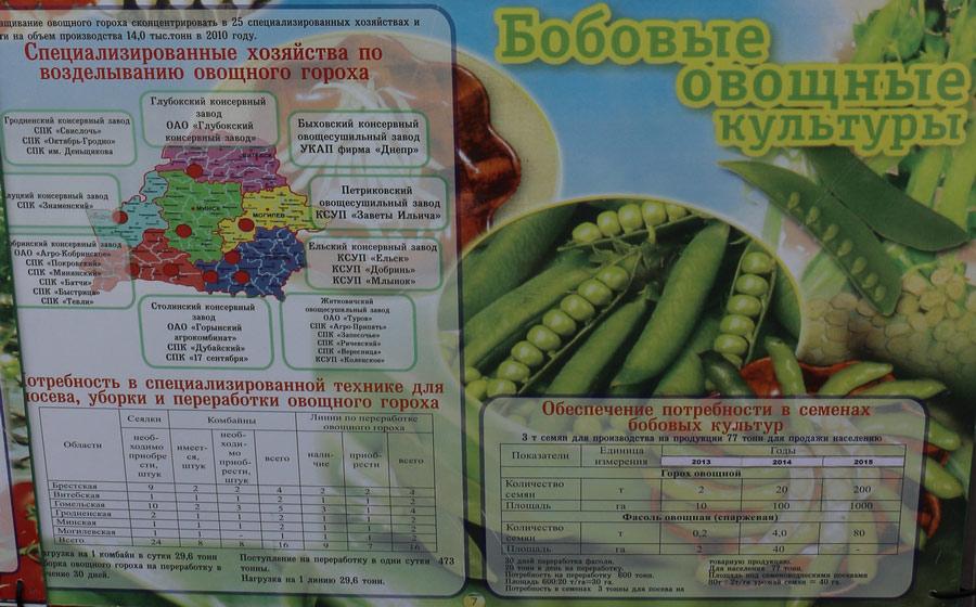 Институт овощеводства на БЕЛАГРО-2016. Бобовые овощные культуры