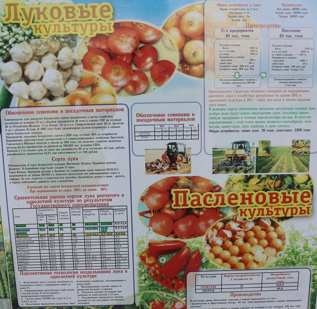 Институт овощеводства на БЕЛАГРО-2016. Луковые культуры