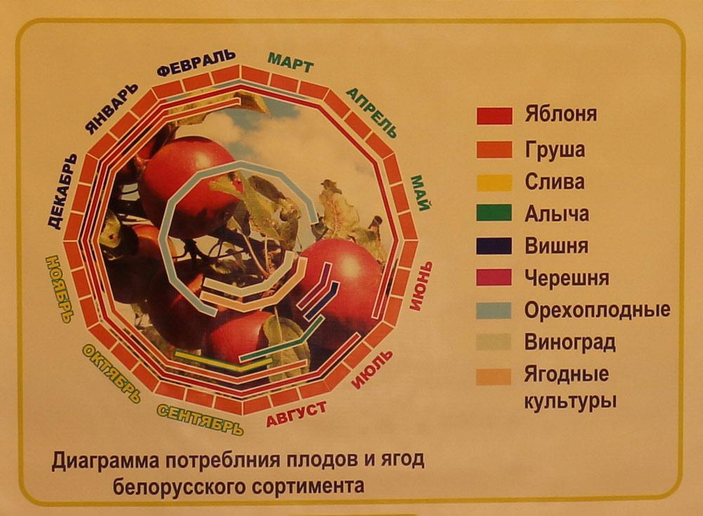 Диаграмма потребления плодов и ягод белорусского сортимента. Институт плодоводства на БЕЛАГРО-2014