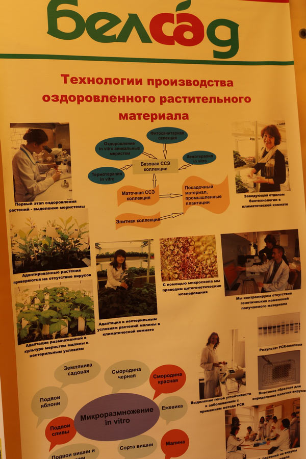 Технологии производства оздоровленного растительного материала. Институт плодоводства на БЕЛАГРО-2014