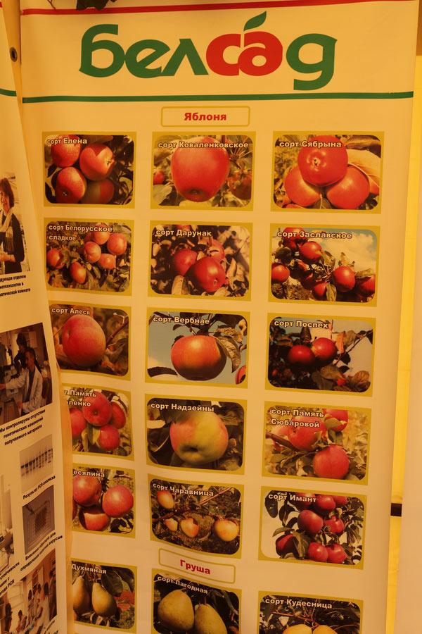 Яблоня. Сорта. Институт плодоводства на БЕЛАГРО-2014