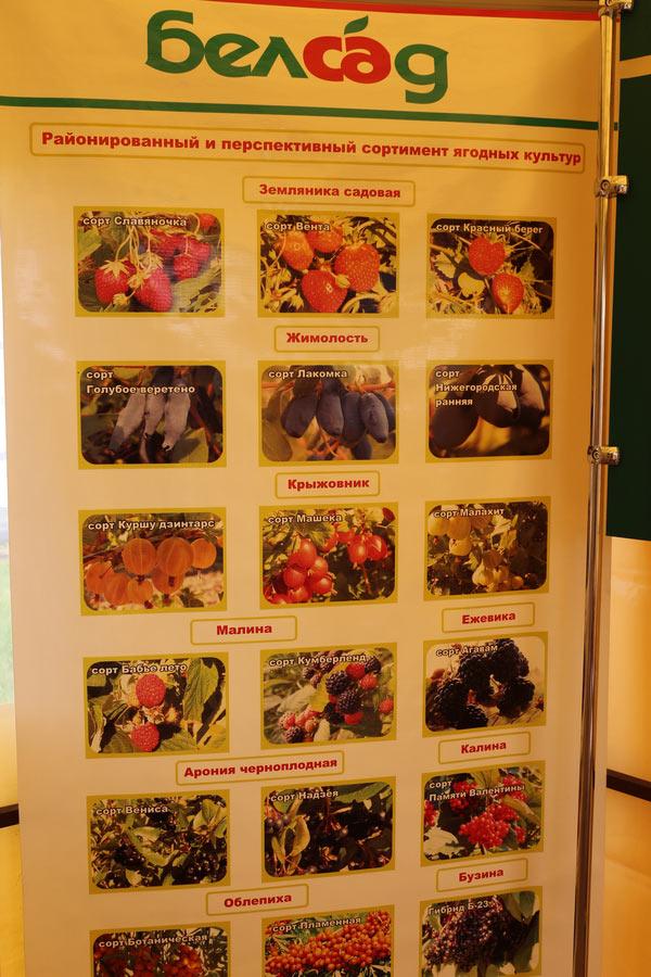 Районированный и перспективный сортимент ягодных культур. Институт плодоводства на БЕЛАГРО-2014