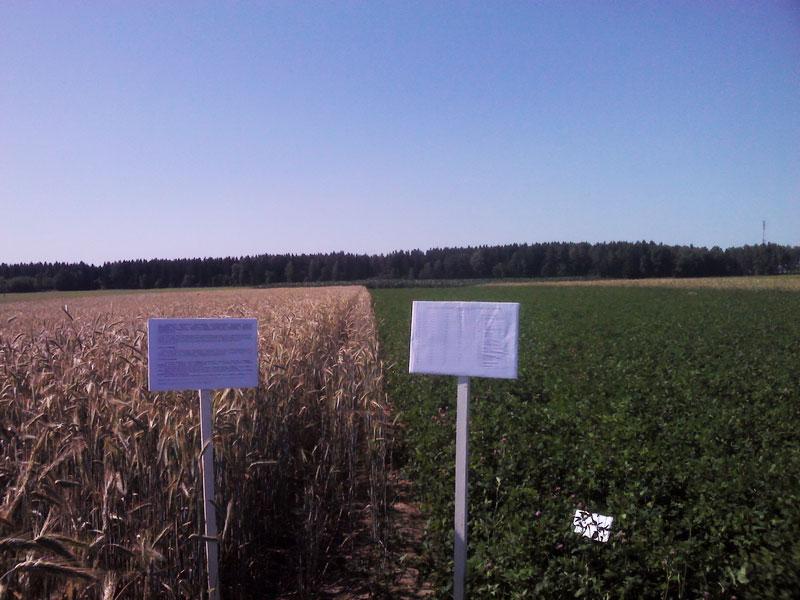 Опытное поле Института почвоведения и агрохимии