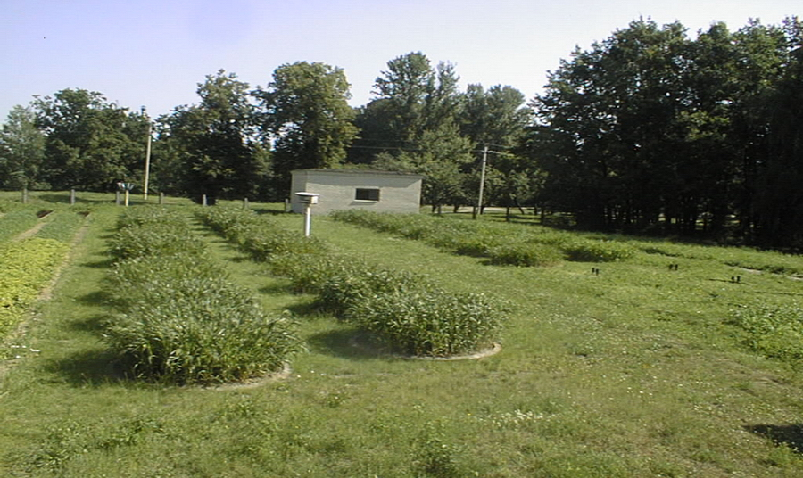 Лизиметрическая станция Института почвоведения и агрохимии, южная части г. Минска, введена в эксплуатацию с 1980 года и функционирует по настоящее время