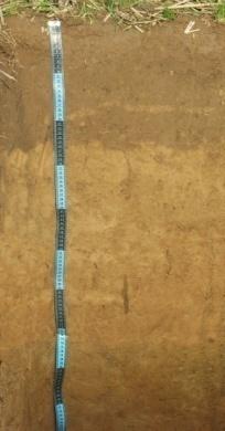 Катена (Слабо-окультуренная) дерново-палево-подзолистых почв на лессовидных суглинках. Исследования Института почвоведения и агрохимии 2016 г.