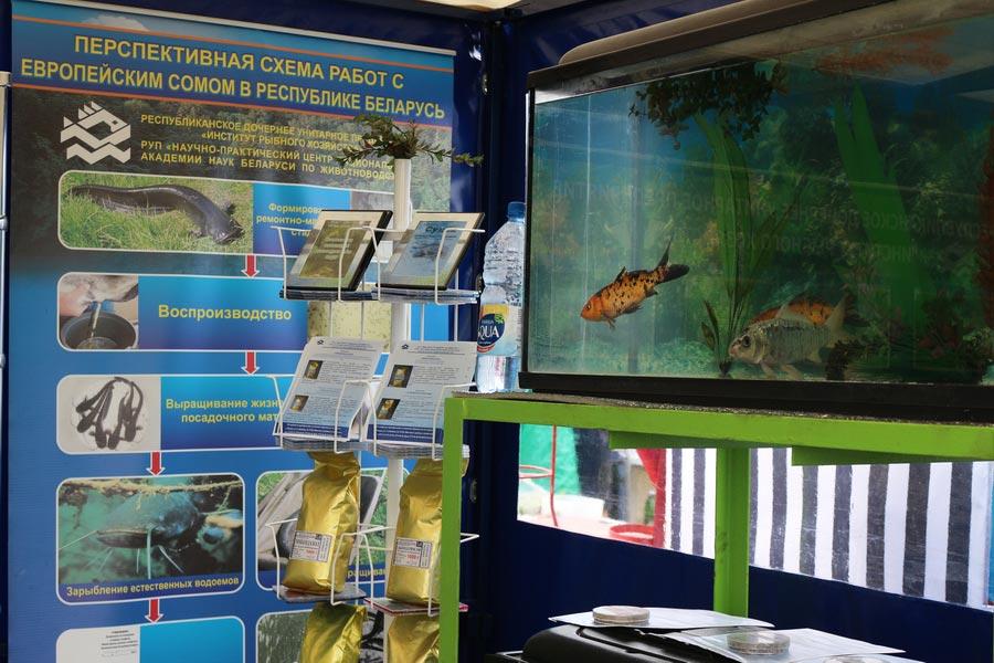 Институт рыбного хозяйства на БЕЛАГРО-2014, ОАО Гастелловское, 3-8 июня 2014 г.