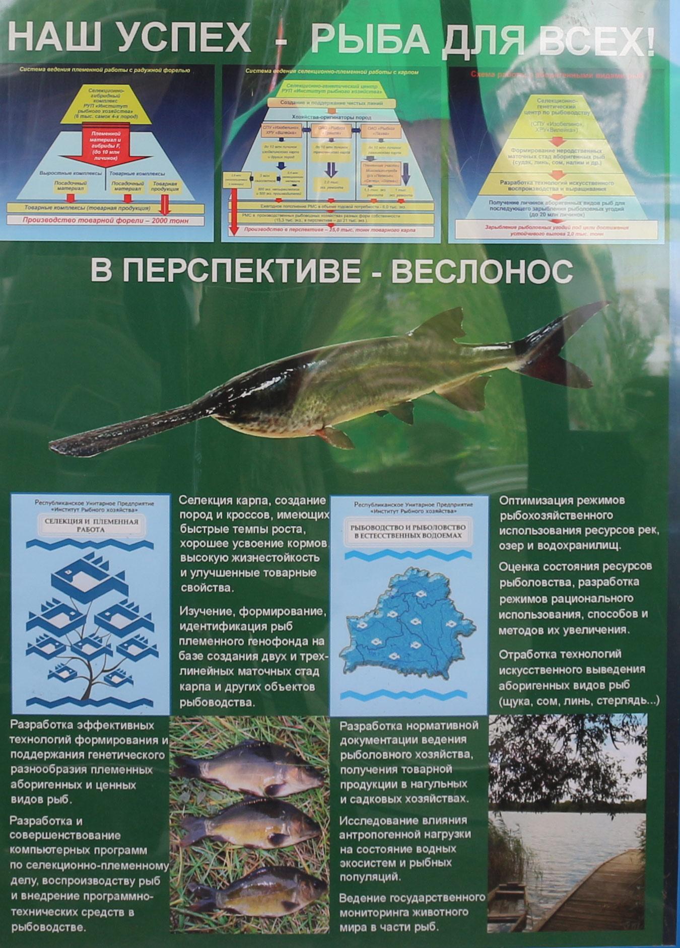 Институт рыбного хозяйства. Селекция и племенная работа