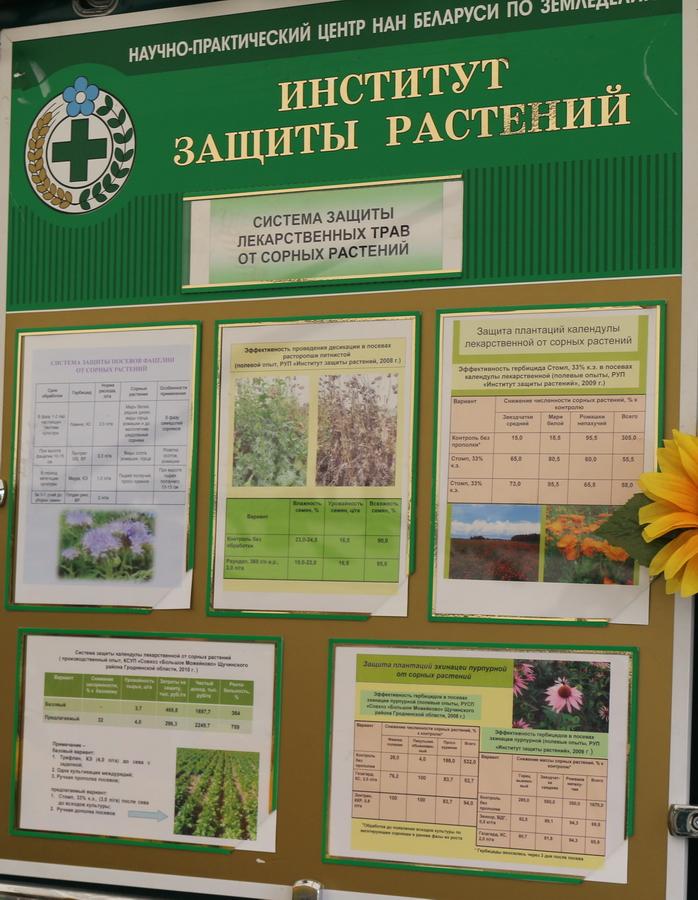 Институт защиты растений. Система защиты лекарственных трав от сорных растений