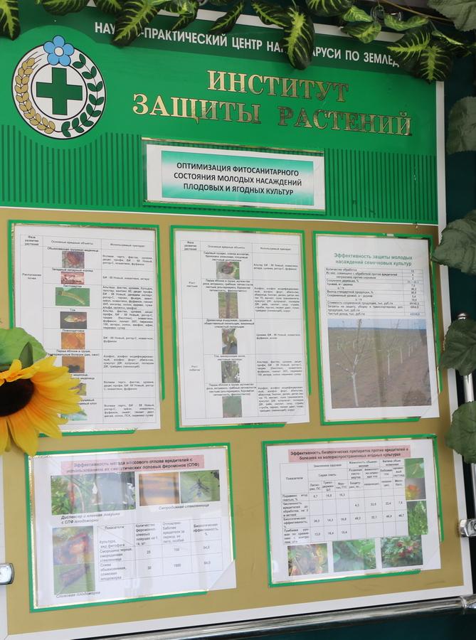 Институт защиты растений. Оптимизация фитосанитарного состояния молодых насаждений плодовых и ягодных культур