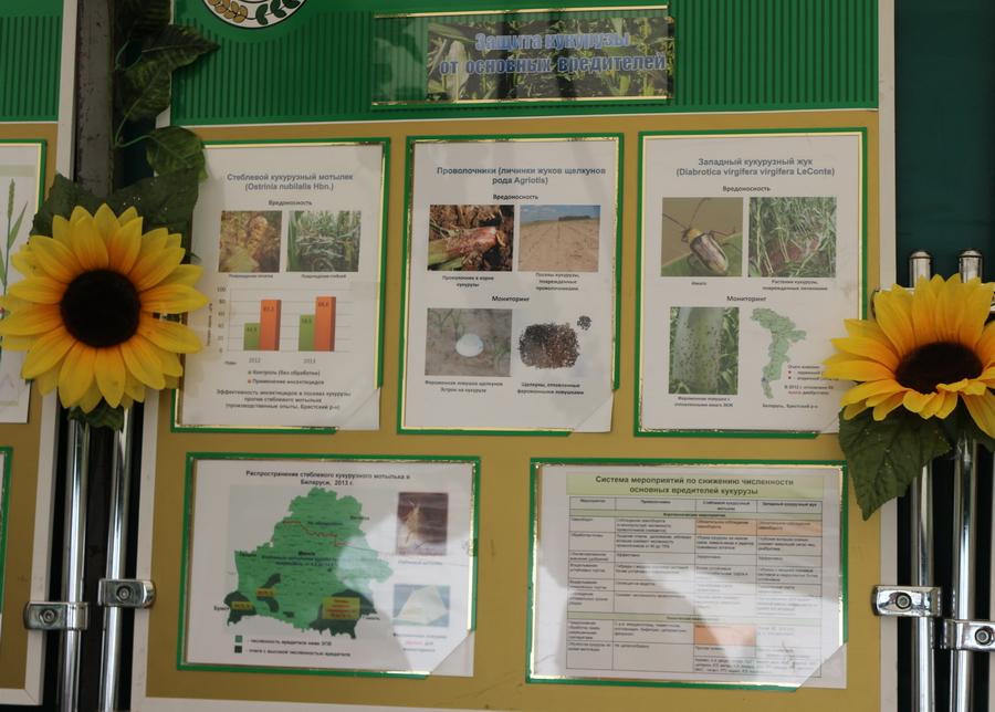 Институт защиты растений. Защита кукурузы от основных вредителей