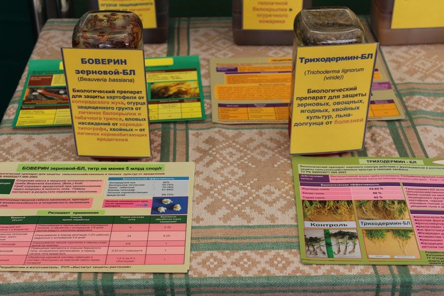 Институт защиты растений. Биологические препараты Боверин зерновой-БЛ (Beauveria bassiana) и Триходермин-БЛ (Trichoderma lignorum (viride))