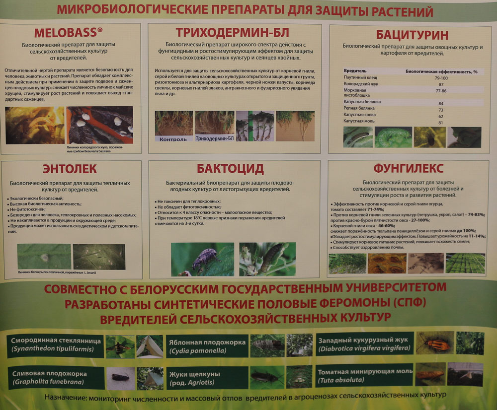 Микробиологические препараты для защиты растений. Исследования Института защиты растений