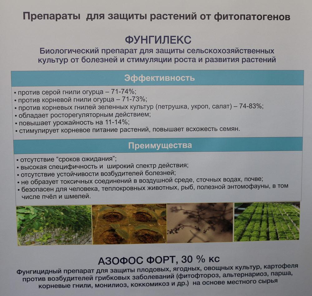 Препараты для защиты растений от фитопатогенов Фунгилекс, Азофос Форт, 30% кс. Исследования Института защиты растений