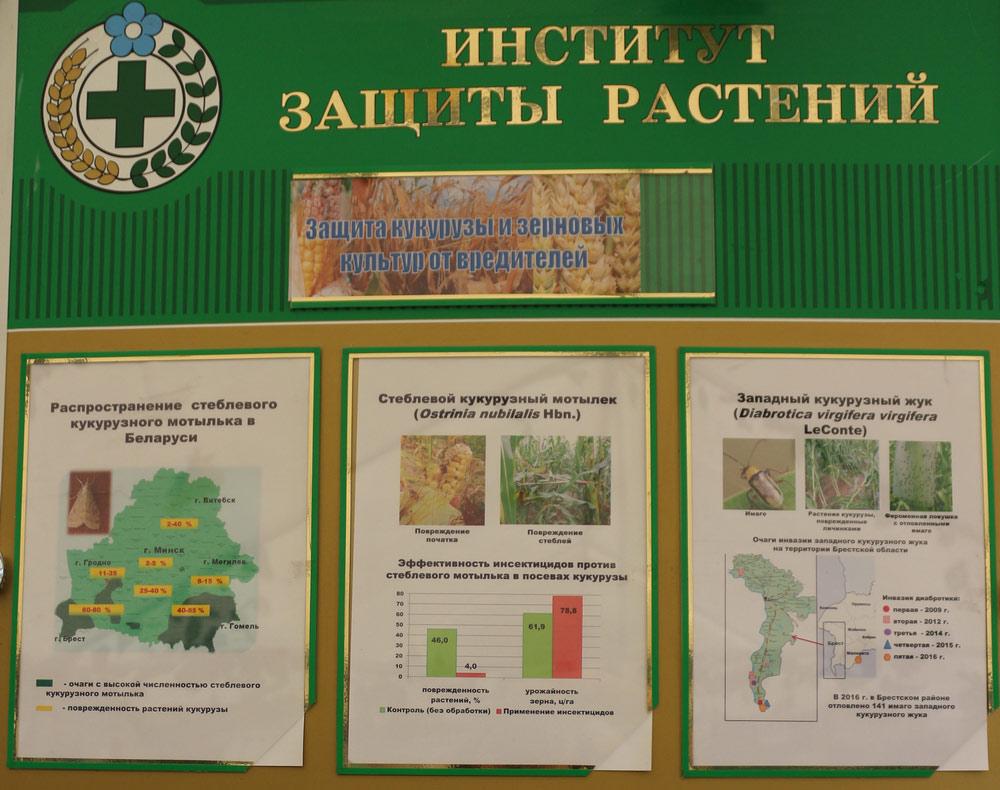 Защита кукурузы и зерновых культур от вредителей. Исследования Института защиты растений
