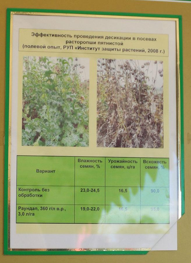 Эффективность проведения десикации в посевах расторопши пятнистой. Исследования Института защиты растений