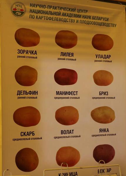 НПЦ по картофелеводству и плодоовощеводству на БЕЛАГРО-2014. Сорта картофеля