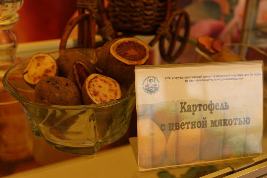 НПЦ по картофелеводству и плодоовощеводству на БЕЛАГРО-2014. Картофель с цветной мякотью