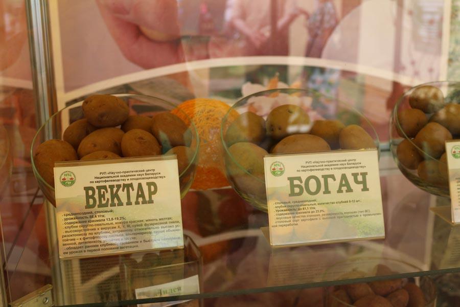 НПЦ по картофелеводству и плодоовощеводству на БЕЛАГРО-2014. Сорта картофеля Вектар и Богач