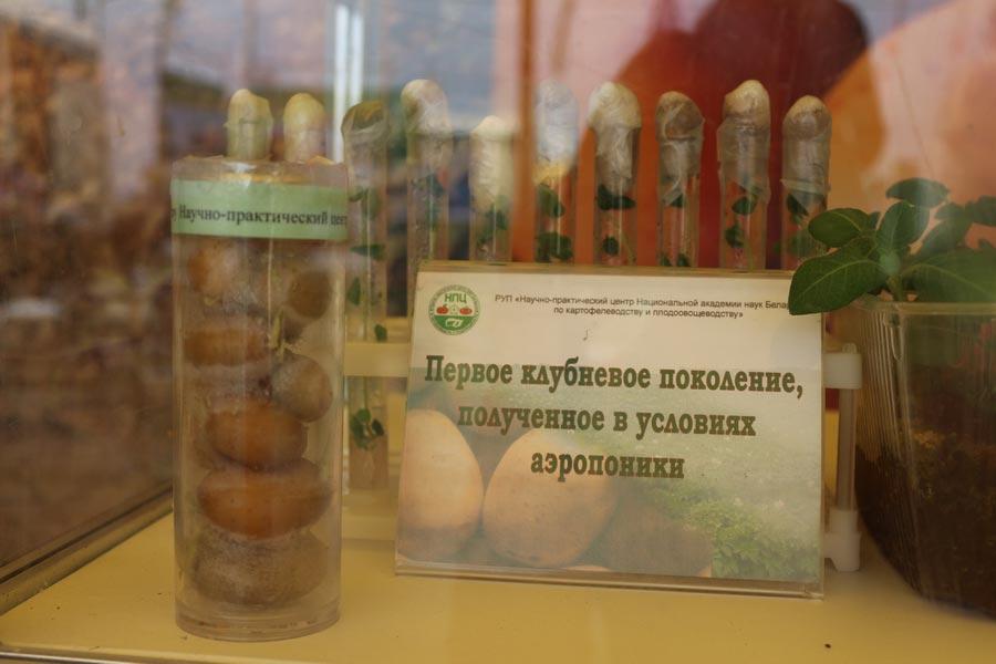 НПЦ по картофелеводству и плодоовощеводству на БЕЛАГРО-2014. Первое клубневое размножение полученное в условиях аэропоники