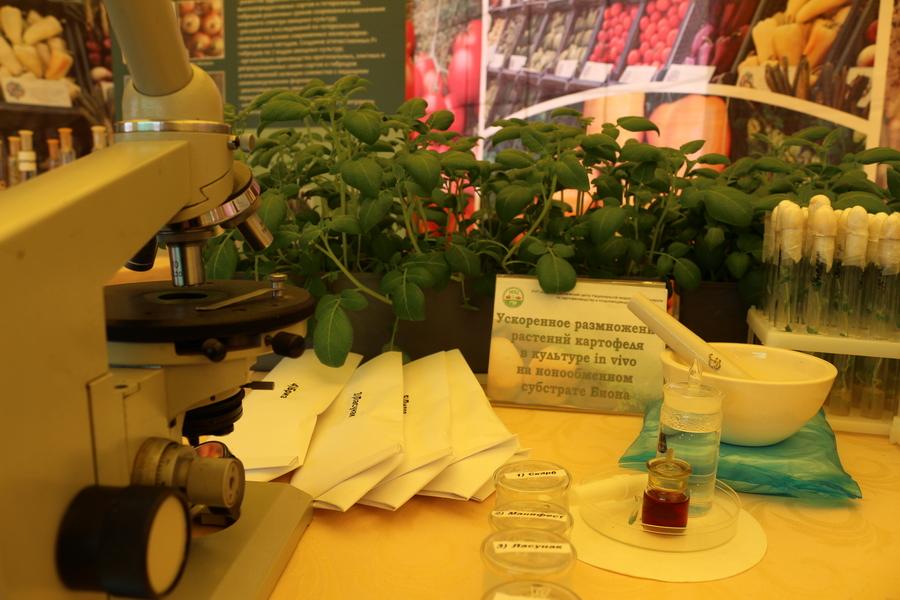 НПЦ по картофелеводству и плодоовощеводству на БЕЛАГРО-2016. Ускоренное размножение растений картофеля в культуре in vitro на ионнообменном субстрате Биона