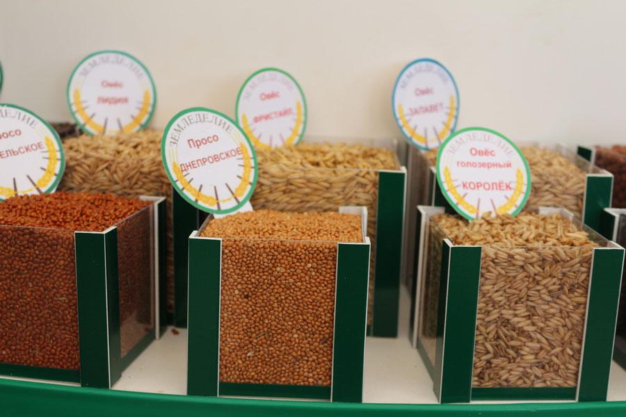 Семена: просо Днепровское, овес голозерный Королек. Исследования НПЦ по земледелию