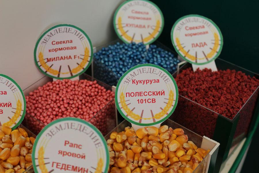 Семена: кукуруза Полесский 101СВ, свекла кормовая Милана F1, свекла кормовая Лада. Исследования НПЦ по земледелию