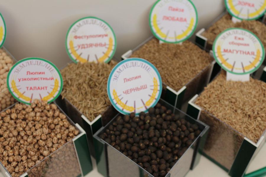 Семена: люпин узколистный Талант, люпин Черныш. Исследования НПЦ по земледелию