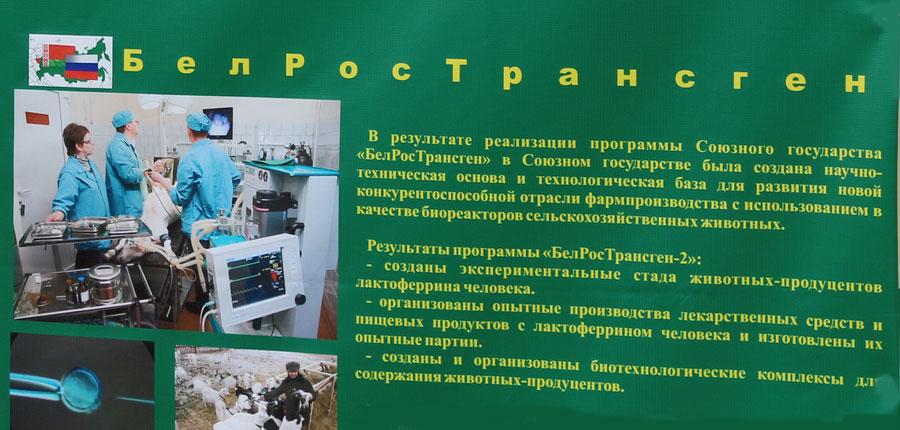 Научно-практический центр НАН Беларуси по животноводству. Программа Союзного государства БелРосТранген