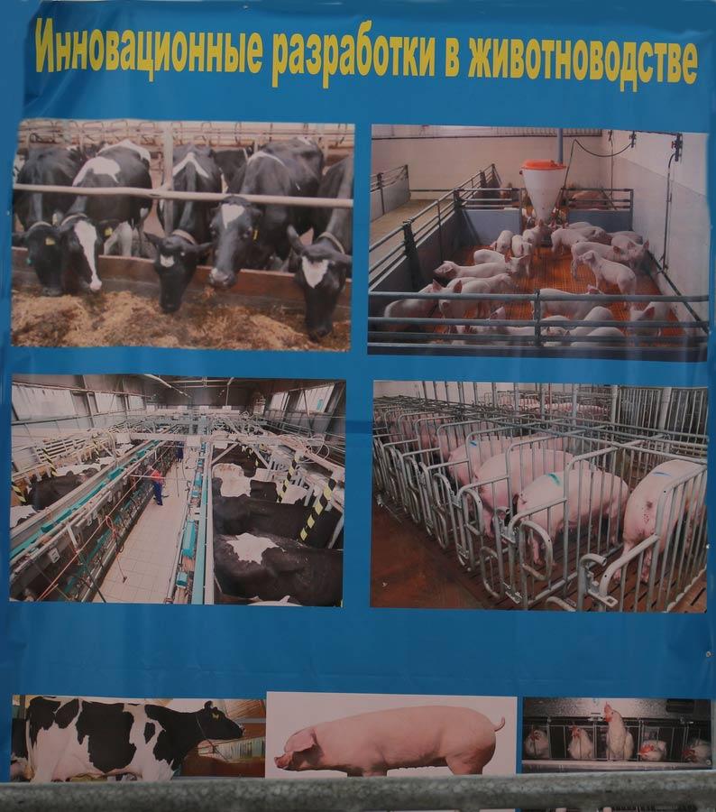 Научно-практический центр НАН Беларуси по животноводству. Инновационные разработки в животноводстве