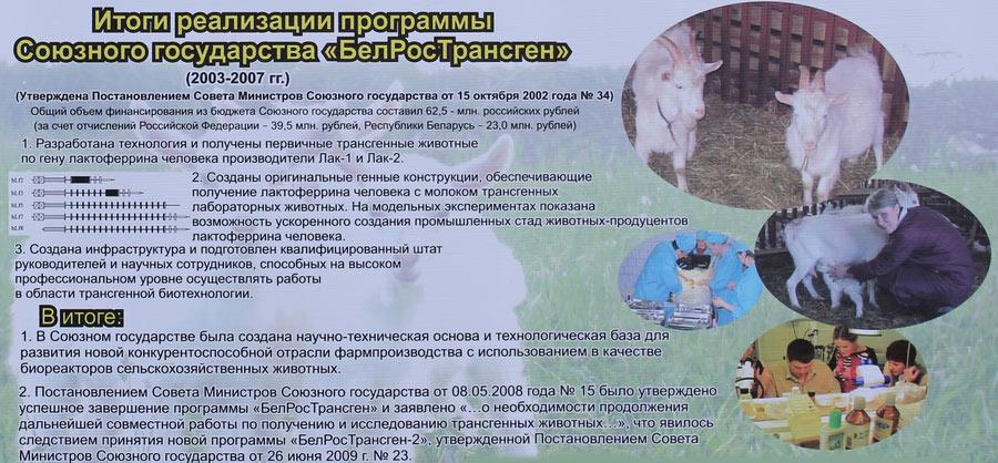 Научно-практический центр НАН Беларуси по животноводству. Итоги реализации программы Союзного государства БелРосТрансген