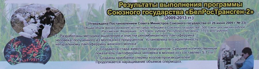 Научно-практический центр НАН Беларуси по животноводству. Результаты выполнения программы Союзного государства БелРосТрансген-2