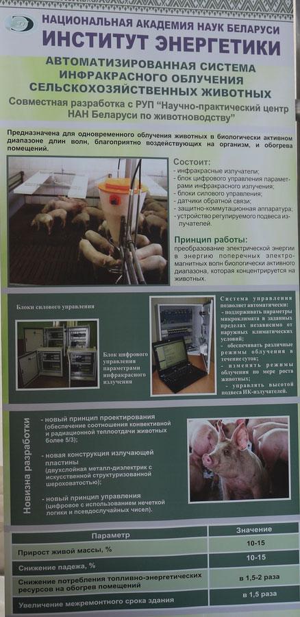Научно-практический центр НАН Беларуси по животноводству. Автоматизированная система инфракрасного облучения сельскохозяйственных животных