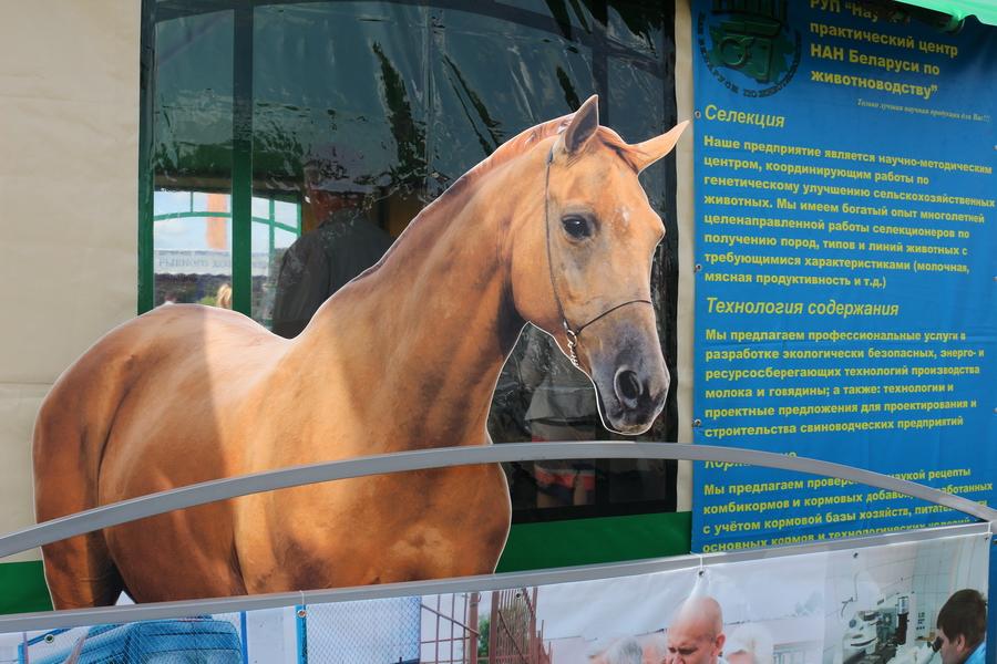 Научно-практический центр НАН Беларуси по животноводству. Селекция сельскохозяйственных животных. БЕЛАГРО-2016