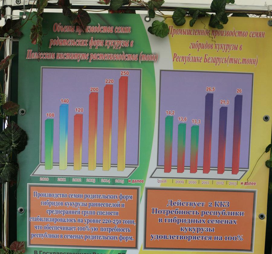 Объемы производства семян родительских форм кукурузы в Полесском институте растениеводства. Промышленное производство семян гибридов кукурузы в Беларуси