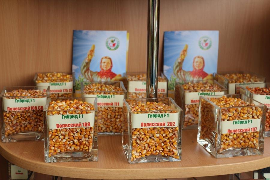Полесский институт растениеводства. Гибриды кукурузы белорусской селекции