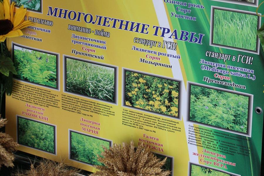 Полесский институт растениеводства. Сорта многолетних трав белорусской селекции