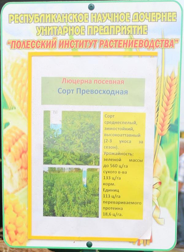 Полесский институт растениеводства. Люцерна посевная. Сорт Превосходная